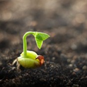 Seed sprouting on soil
