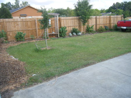 A fenced back yard with grass and trees.
