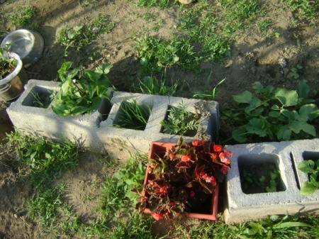 Growing plants in a cinderblock.