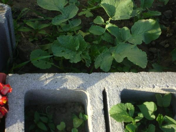 Cinder Block Planters Thriftyfun