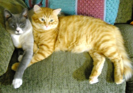 Two cats (one grey and white, one orange tabby) lying together on the sofa