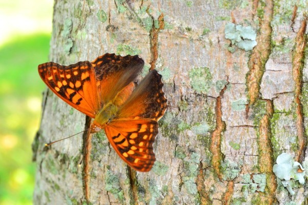 Orange and black butterfly on a tree