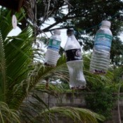 Plastic bottle hanging in a tree as a noisemaker.