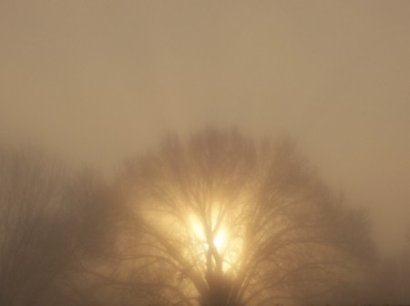 The sun centered perfectly behind a large tree on a foggy morning.
