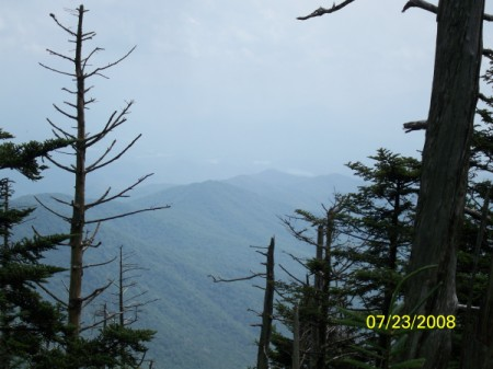 Smokey Mountains Pines