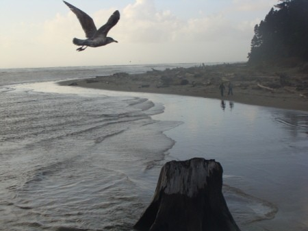 A bird flying over the beach with people in the distance.
