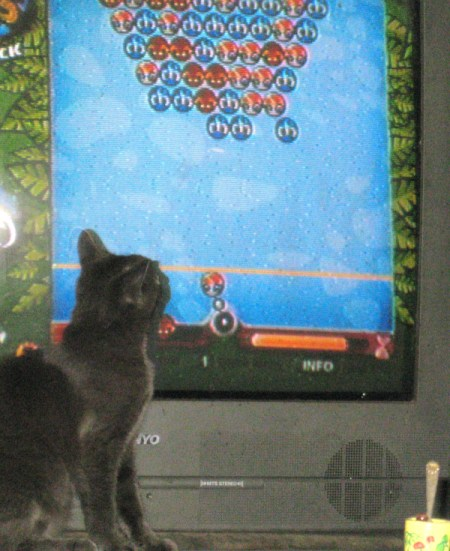 A gray shorthaired kitten watching a video game on a TV.