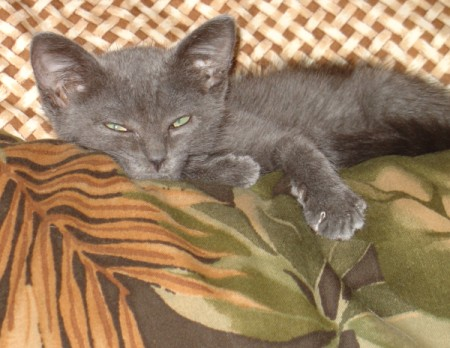 A grey kitten sleeping on top of a tropical pillow.