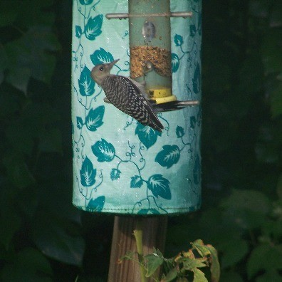 A woodpecker at a bird feeder