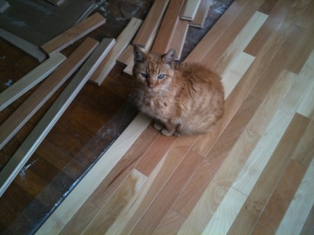 Cat on Hardwood