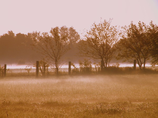misty morning meadow