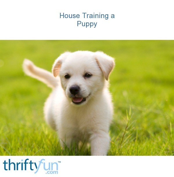 how to house train your puppy when you work