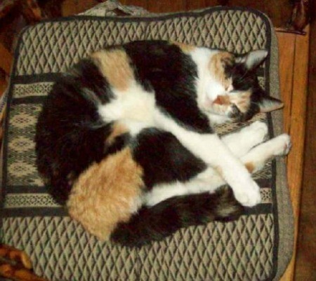 Sleeping calico cat on cushion