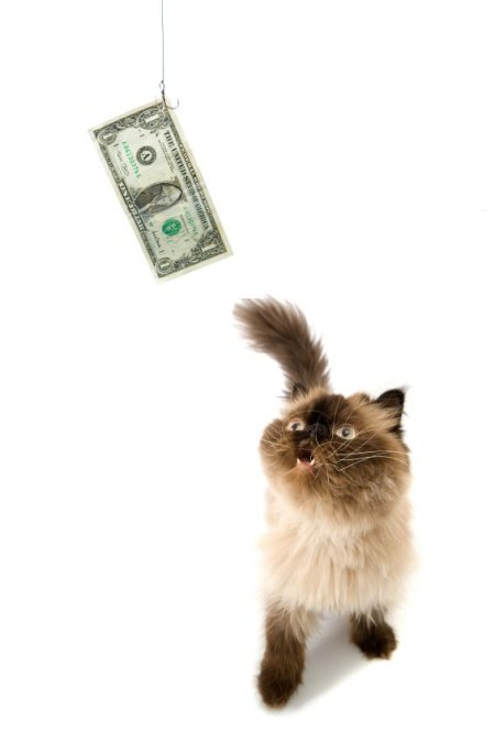 Cat chasing a dollar.