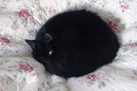 Black cat curled up on quilt