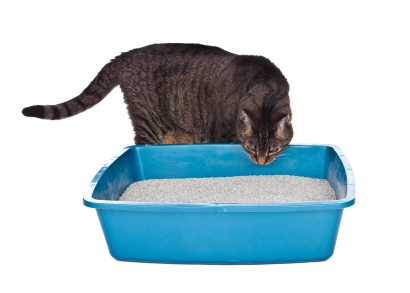 A cat smelling a litter box