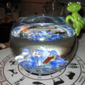 Glass fishbowl with blue rocks and one adult goldfish.