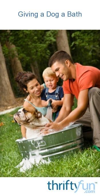 Giving A Dog A Bath Thriftyfun
