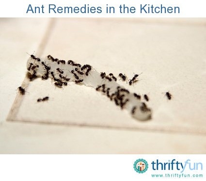 getting rid of ants in the kitchen thriftyfun. Black Bedroom Furniture Sets. Home Design Ideas