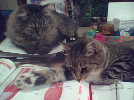 Two cats relaxing on desk