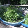 Patio garden using child's pool and barrel