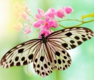 Rice paper butterfly on small pink flowers