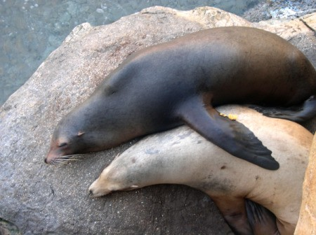 Hugging Seals