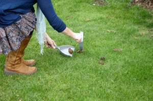 A dog owner cleaning up after a dog in the grass.