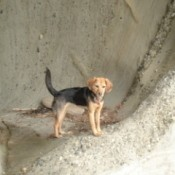 Dog standing on a rock ledge.
