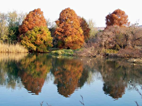 Red trees reflected in calm pond