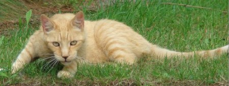 Orange tabby laying on grass