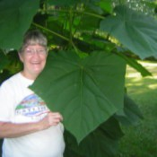 Member standing next to giant plant leaf.