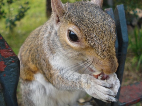 Squirrel Up-close