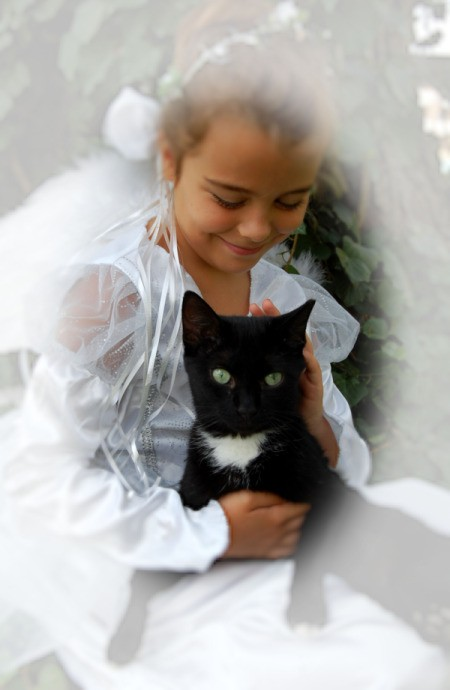 Black and White Cat Being Held by a Little Girl