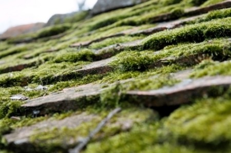 Lots of Moss on Roof