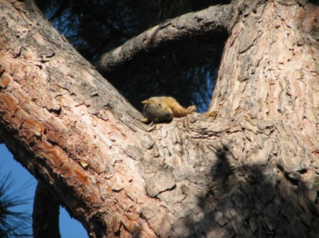 A young squirrel in a tree.