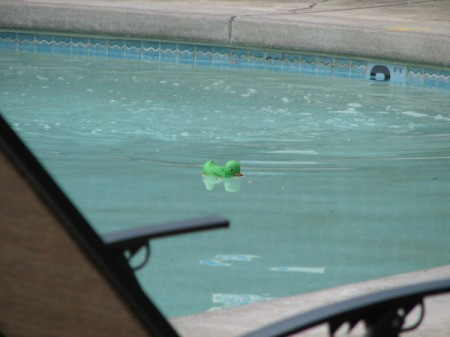 A green rubber duckie in a swimming pool.