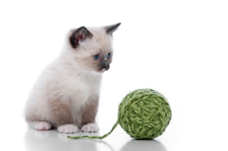 A kitten with a ball of yarn.