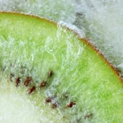 Frozen kiwi slice.