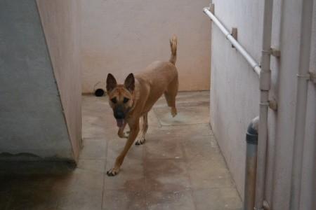 Rambo the Dog Running Around Corner on Tile Floor