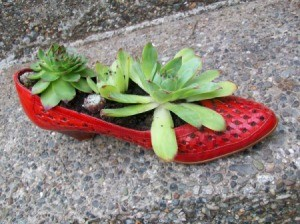 Shoe Planter with Hen and Chicks planted inside