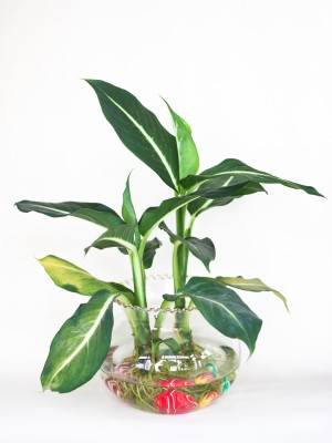 Growing plants in water thriftyfun - Indoor water plants list ...