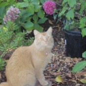 Lilly Lulu, Orange Cat, Sitting Garden