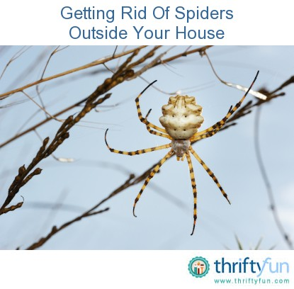 Getting rid of spiders outside house thriftyfun for How to get rid of spiders in house