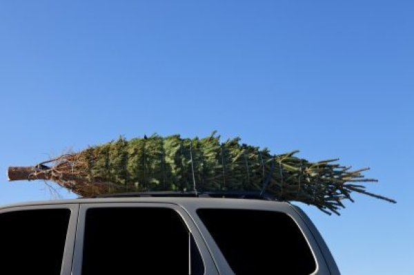 Christmas tree on top of an SUV.