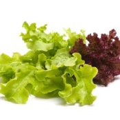 Photo of different types of lettuce.