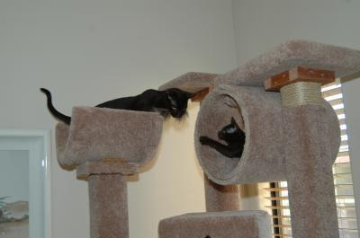 Photo of a homemade cat tree.