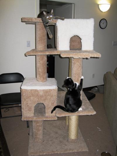 making your own cat tree thriftyfun. Black Bedroom Furniture Sets. Home Design Ideas
