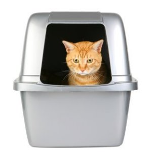 Orange tabby sitting in covered litterbox.