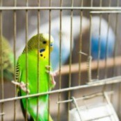 Green and yellow bird in a birdcage.